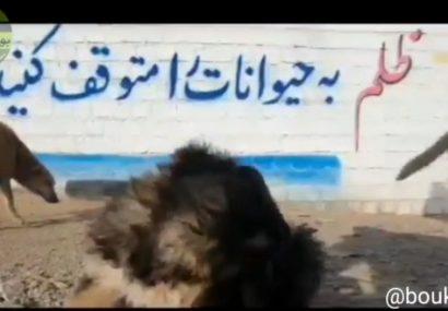 واکنش انجمن بهشدار بوکان به حاشیههای ایجاد شده برای سگهای ولگرد مهاباد